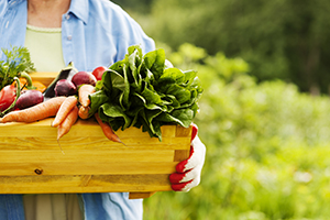 毎日大量に出る「生ゴミ」は家庭菜園で再活用!